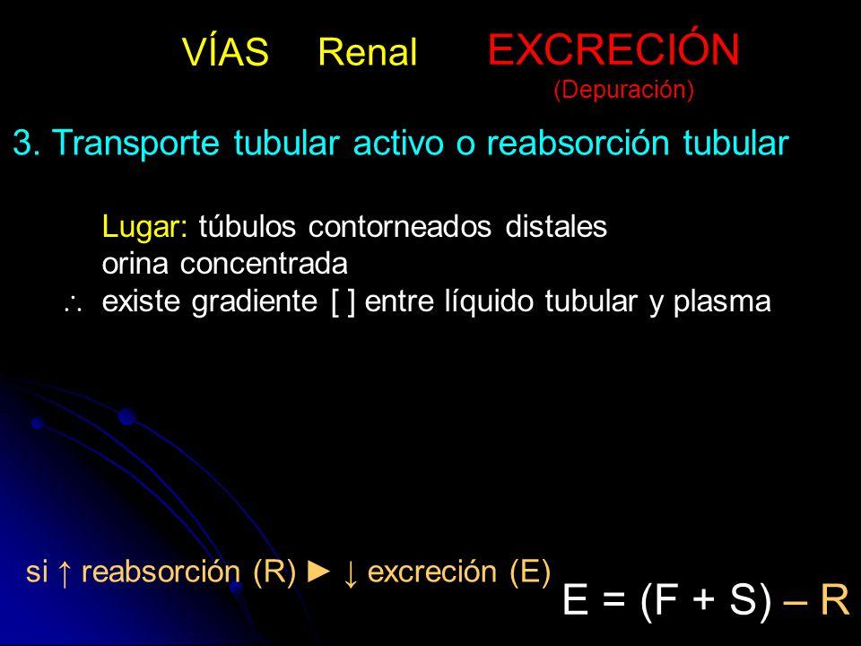 Lugar: túbulos contorneados distales orina concentrada  existe gradiente [ ] entre líquido tubular y plasma 3.