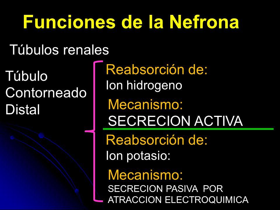 Funciones de la Nefrona Túbulos renales Túbulo Contorneado Distal Reabsorción de: Ion hidrogeno Mecanismo: SECRECION ACTIVA Reabsorción de: Ion potasio: Mecanismo: SECRECION PASIVA POR ATRACCION ELECTROQUIMICA