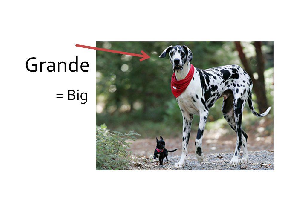 Grande = Big