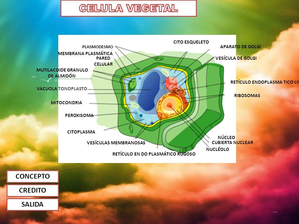Эндоплазма