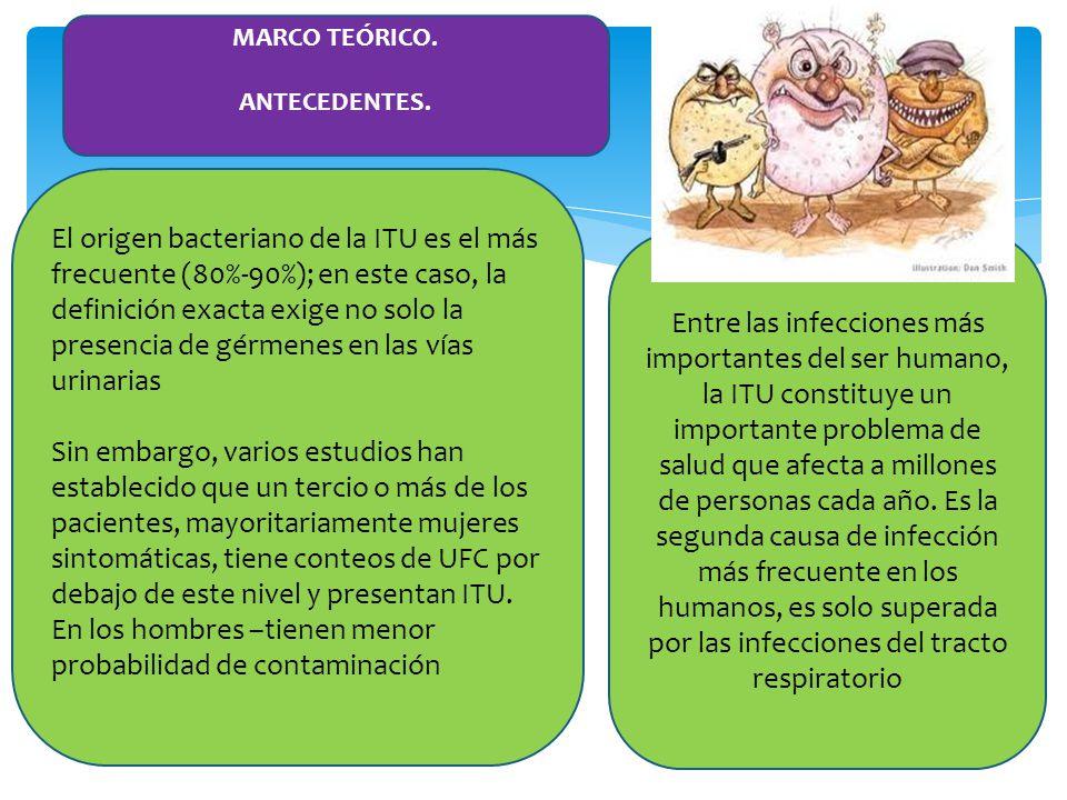 ETIOLOGÍA En más del 95% de los casos, un único microorganismo es el responsable de la ITU.