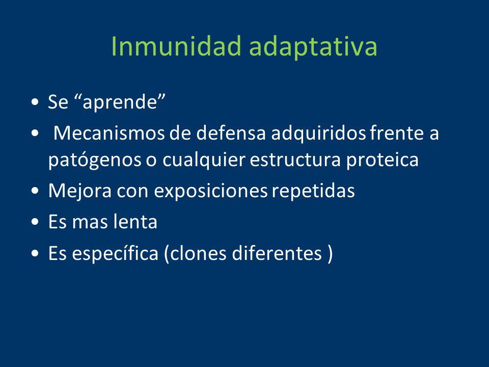 Inmunidad adaptativa Se aprende Mecanismos de defensa adquiridos frente a patógenos o cualquier estructura proteica Mejora con exposiciones repetidas Es mas lenta Es específica (clones diferentes )
