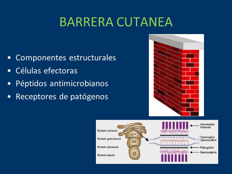BARRERA CUTANEA Componentes estructurales Células efectoras Péptidos antimicrobianos Receptores de patógenos
