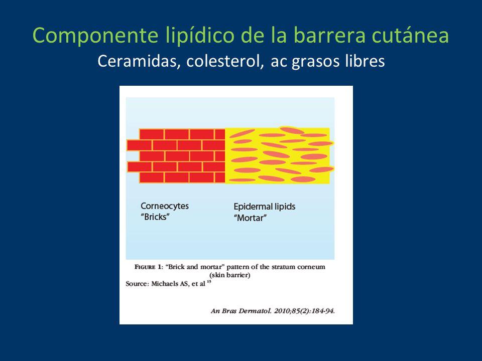 Componente lipídico de la barrera cutánea Ceramidas, colesterol, ac grasos libres