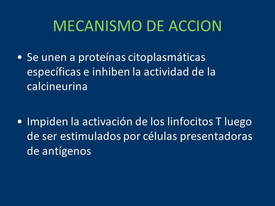 MECANISMO DE ACCION Se unen a proteínas citoplasmáticas específicas e inhiben la actividad de la calcineurina Impiden la activación de los linfocitos T luego de ser estimulados por células presentadoras de antígenos