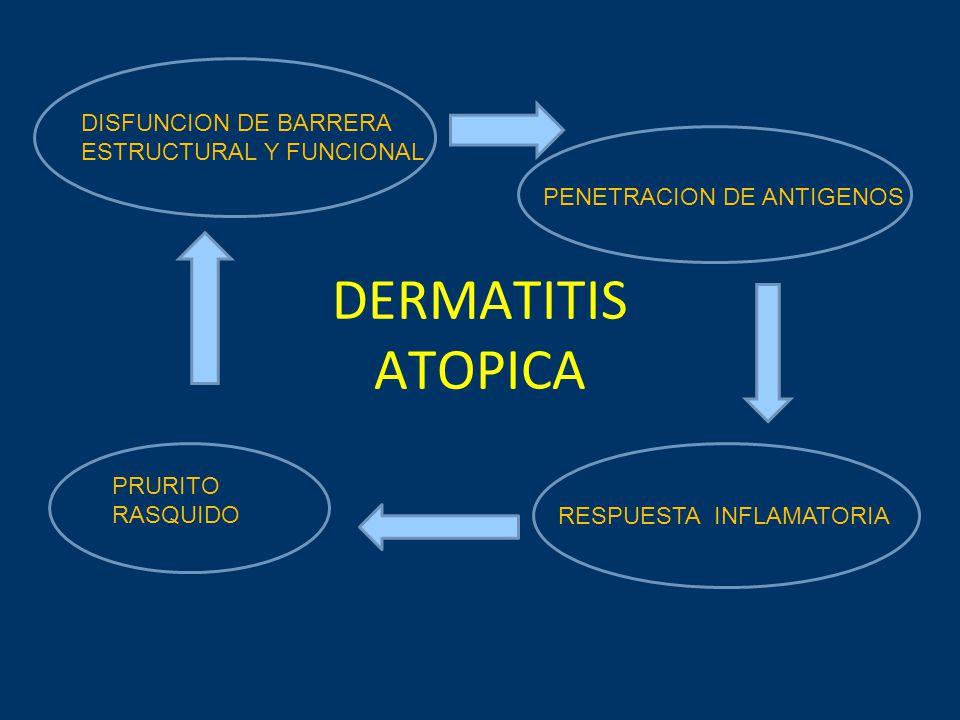 DERMATITIS ATOPICA DISFUNCION DE BARRERA ESTRUCTURAL Y FUNCIONAL PENETRACION DE ANTIGENOS RESPUESTA INFLAMATORIA PRURITO RASQUIDO