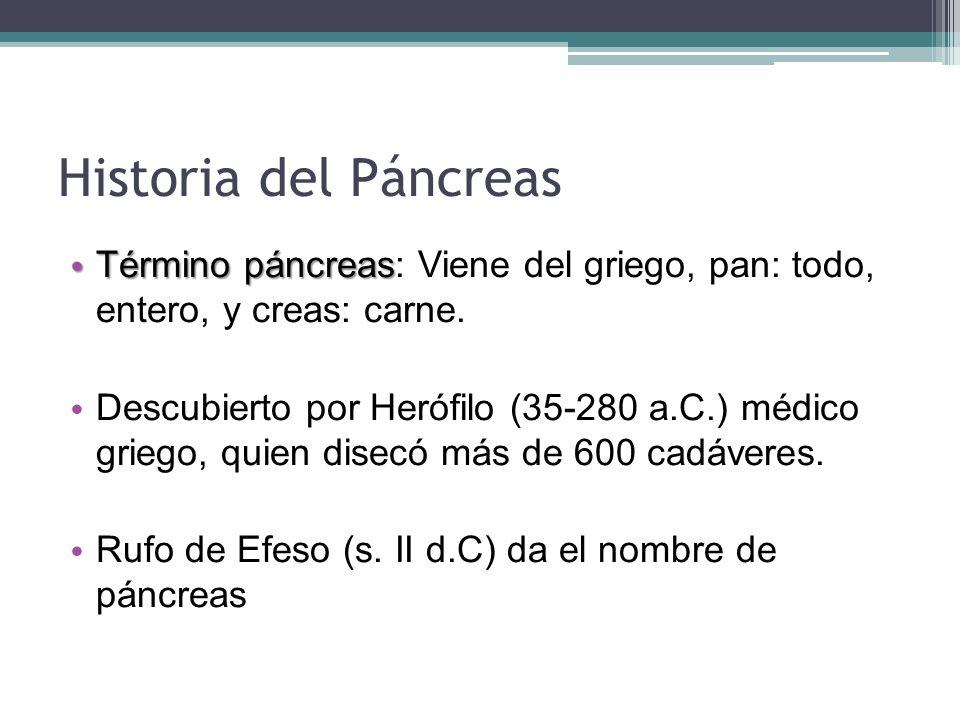 islotes langherhans pancreas: