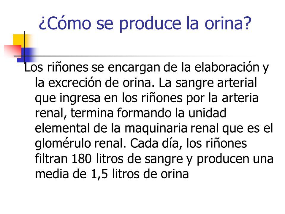 ¿Cómo se produce la orina? Los riñones se encargan de la elaboración y la excreción de orina. La sangre arterial que ingresa en los riñones por la art