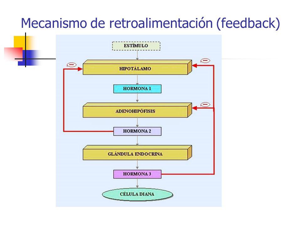 Mecanismo de retroalimentación (feedback)