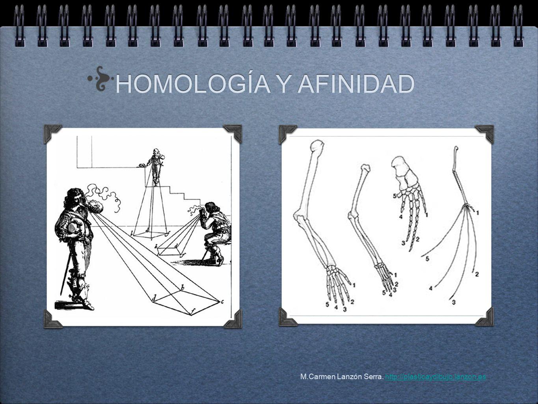 HOMOLOGÍA Y AFINIDAD HOMOLOGÍA Y AFINIDAD M.Carmen Lanzón Serra.