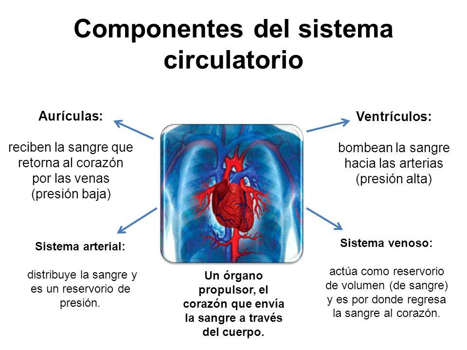 SISTEMA CARDIOVASCULAR: COMPONENTES SIS CIRCULATORIO
