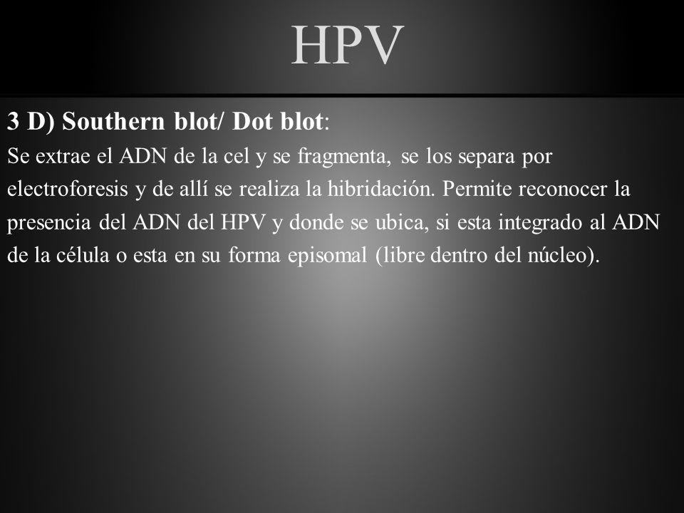 HPV 3 E) P16: Es es una proteína que participa en el ciclo celular normal.