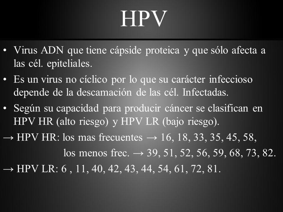 HPV Virus ADN que tiene cápside proteica y que sólo afecta a las cél.