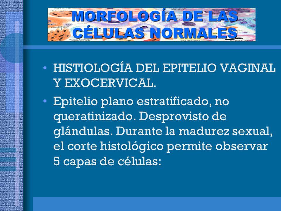 MORFOLOGÍA DE LAS CÉLULAS NORMALES HISTIOLOGÍA DEL EPITELIO VAGINAL Y EXOCERVICAL.
