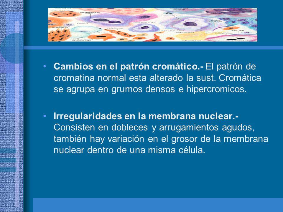 Nucleolos.- Su aumento se analiza en tamaño y numero, en células neoplásicas los nucleolos se tiñen en un color rojizo.