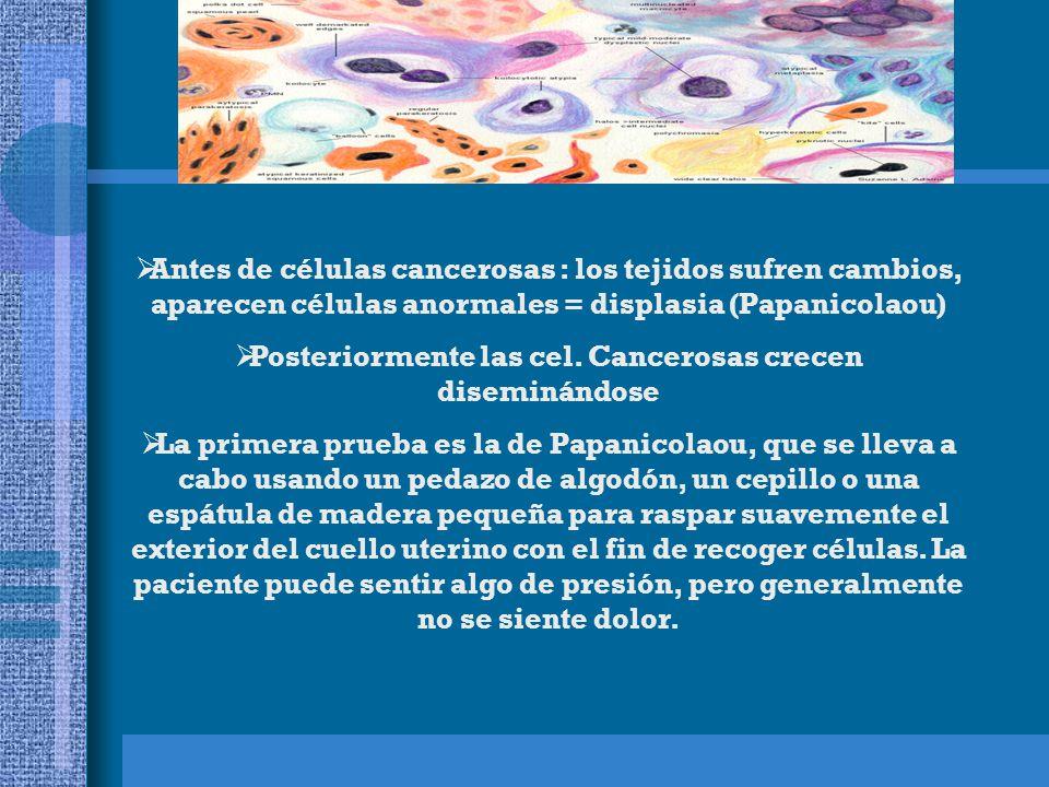  Antes de células cancerosas : los tejidos sufren cambios, aparecen células anormales = displasia (Papanicolaou)  Posteriormente las cel.