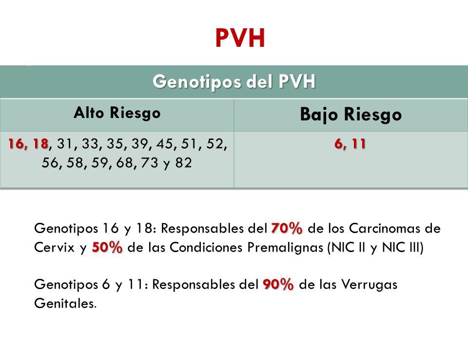PVH 70% 50% Genotipos 16 y 18: Responsables del 70% de los Carcinomas de Cervix y 50% de las Condiciones Premalignas (NIC II y NIC III) 90% Genotipos 6 y 11: Responsables del 90% de las Verrugas Genitales.