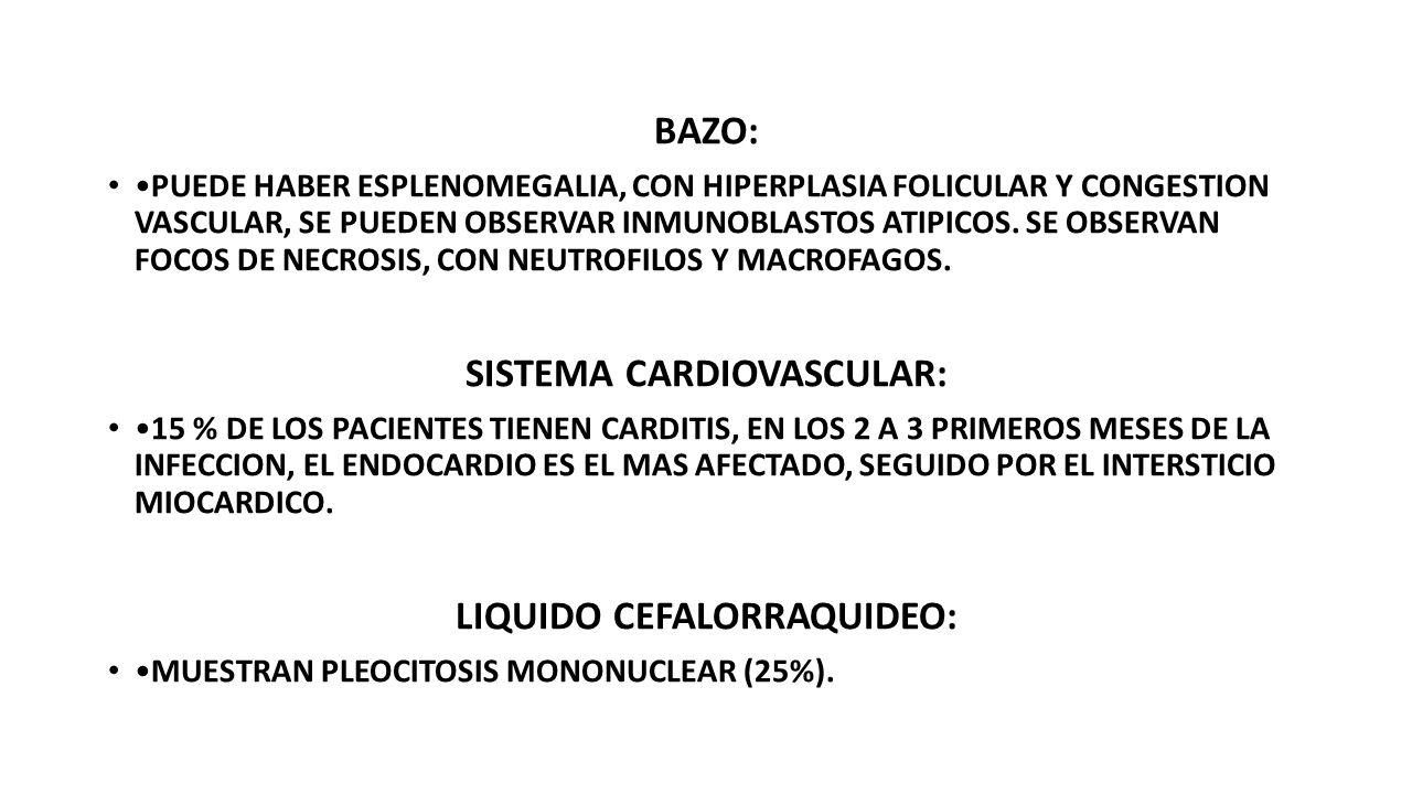 BAZO: PUEDE HABER ESPLENOMEGALIA, CON HIPERPLASIA FOLICULAR Y CONGESTION VASCULAR, SE PUEDEN OBSERVAR INMUNOBLASTOS ATIPICOS.