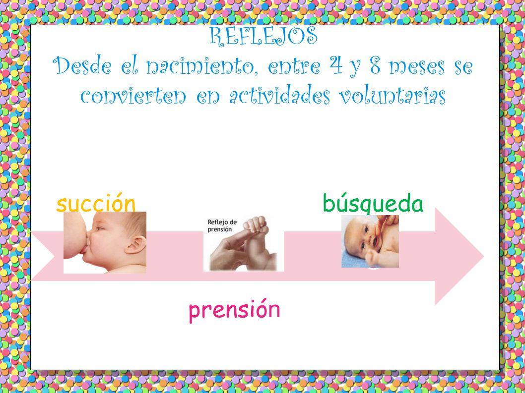 REFLEJOS Desde el nacimiento, entre 4 y 8 meses se convierten en actividades voluntarias succión prensió n búsqueda