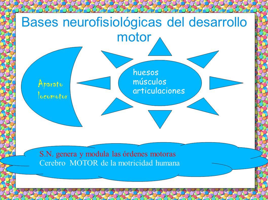 Bases neurofisiológicas del desarrollo motor Apcarato locomotor: unidad bien definida…………………………………… ……………………………Aparato locomotor: unidad bien definida…………………………………… ……C……………………… Aparato locomotor huesos músculos articulaciones S.N.