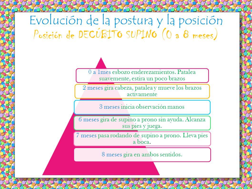 Evolución de la postura y la posición Posición de DECÚBITO SUPINO (0 a 8 meses) 0 a 1mes esbozo enderezamientos.