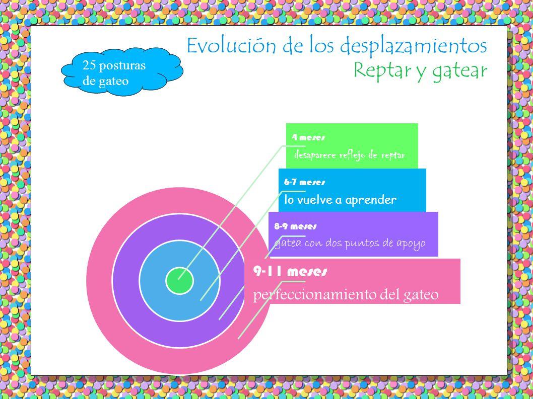 Evolución de los desplazamientos Reptar y gatear 4 meses desaparece reflejo de reptar 6-7 meses lo vuelve a aprender 8-9 meses gatea con dos puntos de