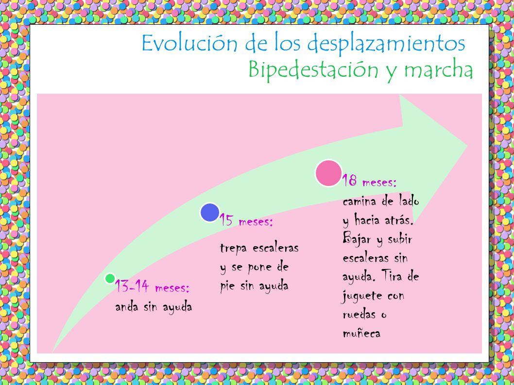 Evolución de los desplazamientos Bipedestación y marcha 13-14 meses: anda sin ayuda 15 meses: trepa escaleras y se pone de pie sin ayuda 18 meses: camina de lado y hacia atrás.
