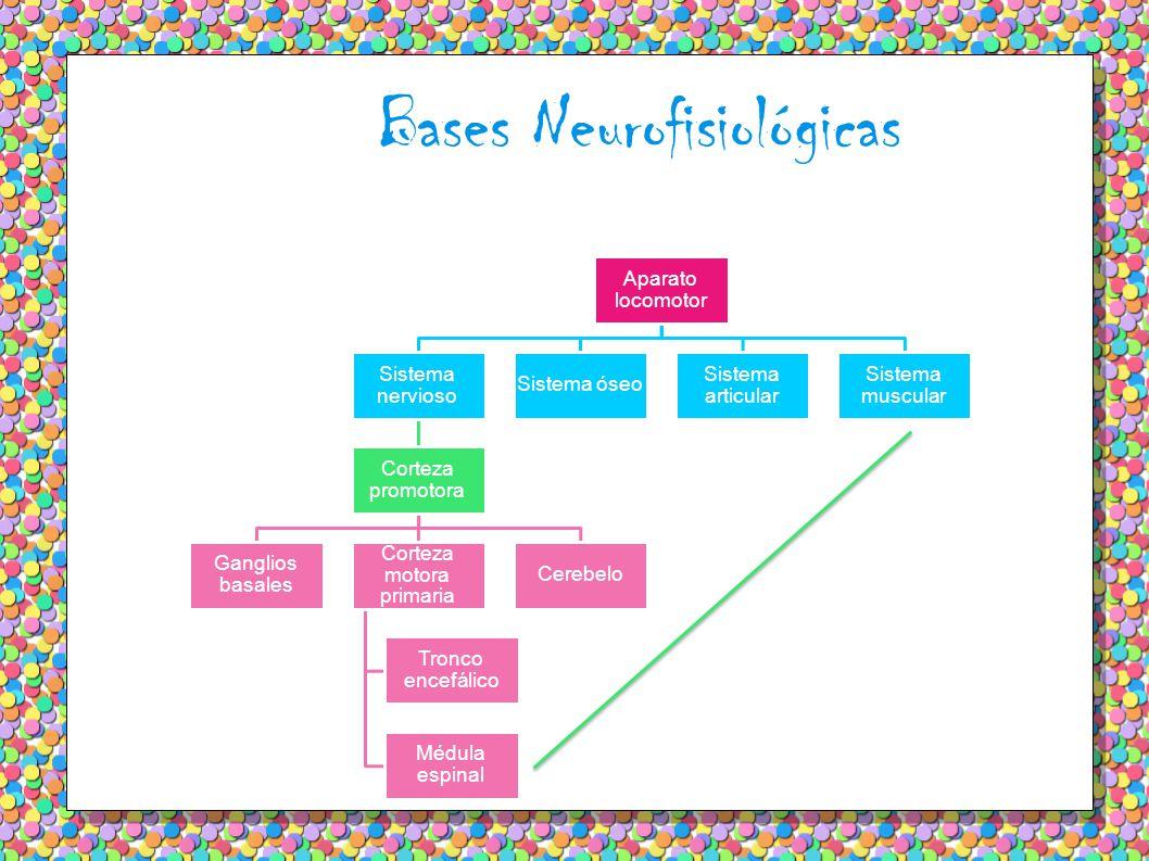 Bases Neurofisiológicas Aparato locomotor Sistema nervioso Corteza promotora Ganglios basales Corteza motora primaria Tronco encefálico Médula espinal