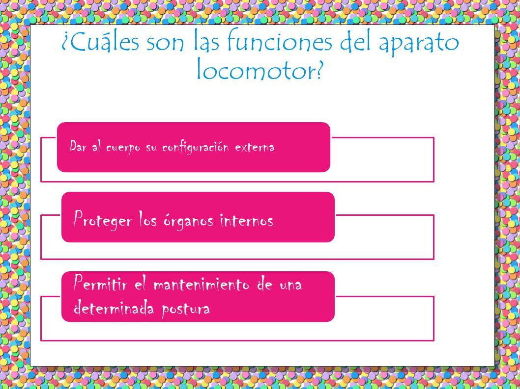 ¿Cuáles son las funciones del aparato locomotor.