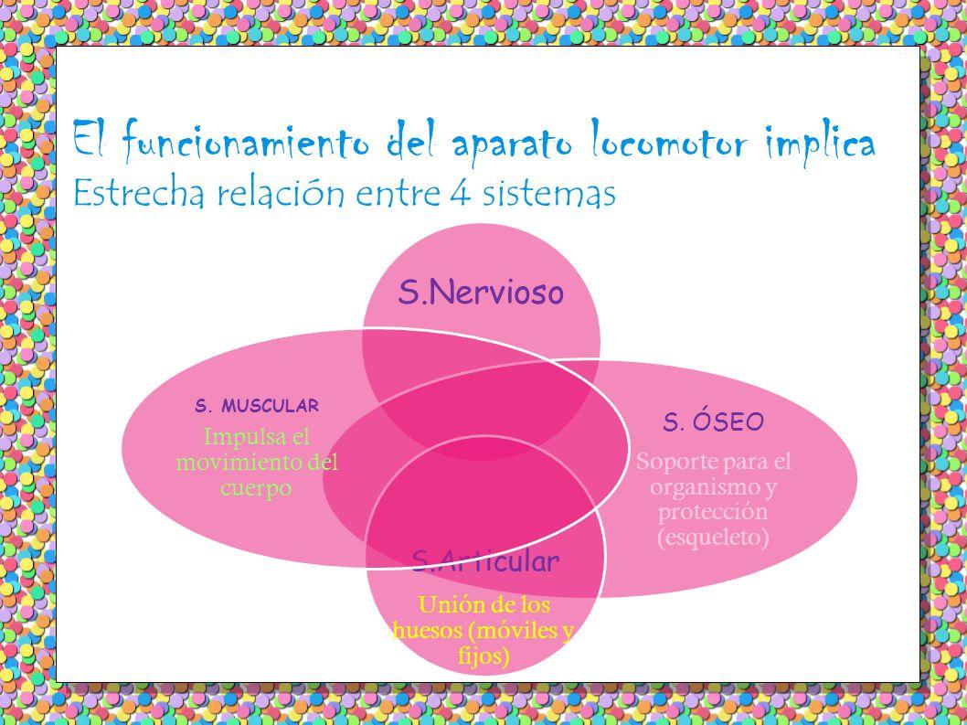 El funcionamiento del aparato locomotor implica Estrecha relación entre 4 sistemas S.Nervioso S.