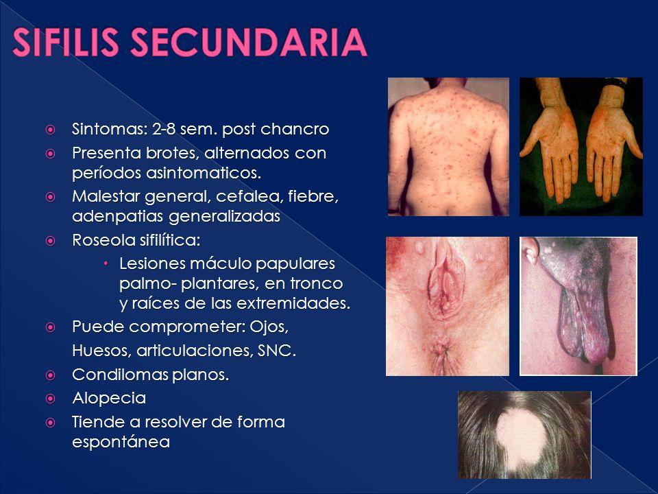 Sintomas: 2-8 sem. post chancro  Presenta brotes, alternados con períodos asintomaticos.  Malestar general, cefalea, fiebre, adenpatias generaliza