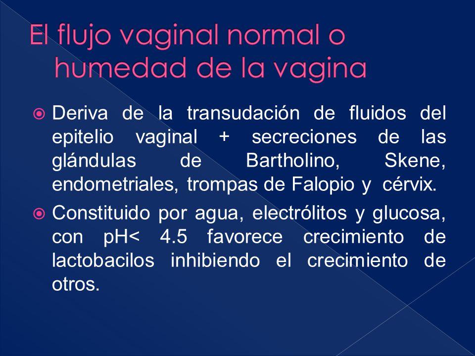  Deriva de la transudación de fluidos del epitelio vaginal + secreciones de las glándulas de Bartholino, Skene, endometriales, trompas de Falopio y c