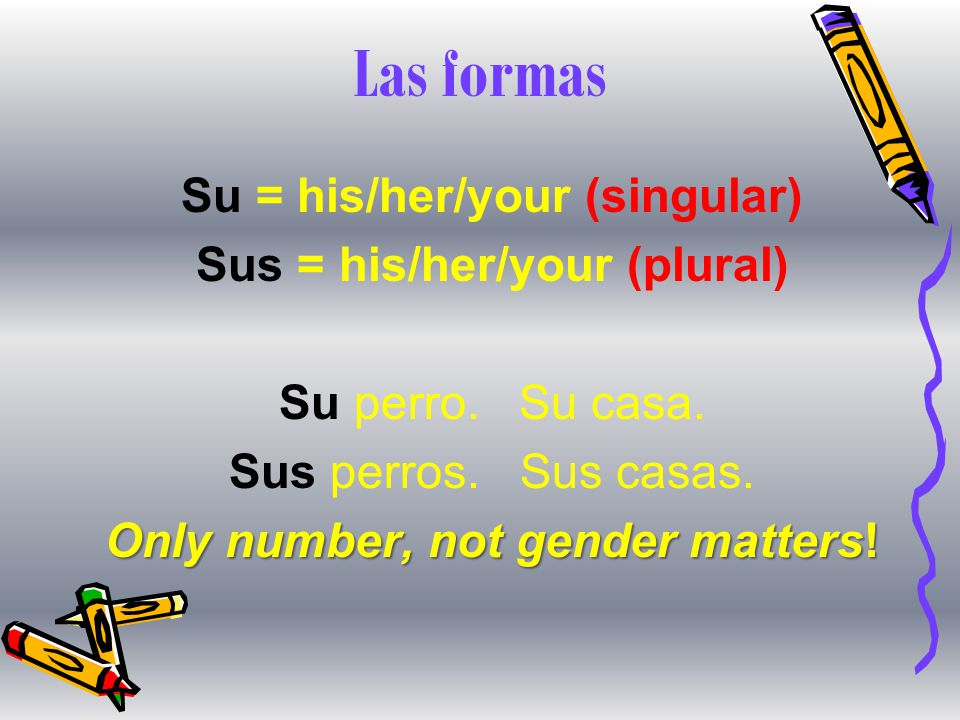 Las formas Su = his/her/your (singular) Sus = his/her/your (plural) Su perro.