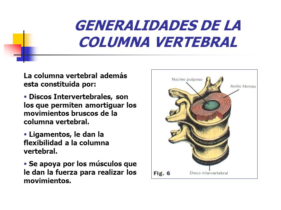 GENERALIDADES DE LA COLUMNA VERTEBRAL La columna vertebral además esta constituida por:  Discos Intervertebrales, son los que permiten amortiguar los movimientos bruscos de la columna vertebral.