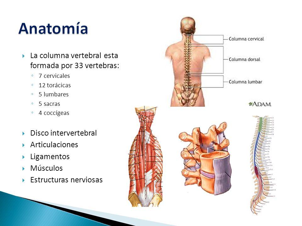  La columna vertebral esta formada por 33 vertebras: ◦ 7 cervicales ◦ 12 torácicas ◦ 5 lumbares ◦ 5 sacras ◦ 4 coccígeas  Disco intervertebral  Articulaciones  Ligamentos  Músculos  Estructuras nerviosas