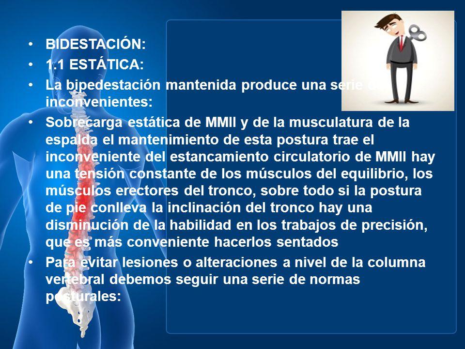BIDESTACIÓN: 1.1 ESTÁTICA: La bipedestación mantenida produce una serie de inconvenientes: Sobrecarga estática de MMII y de la musculatura de la espal