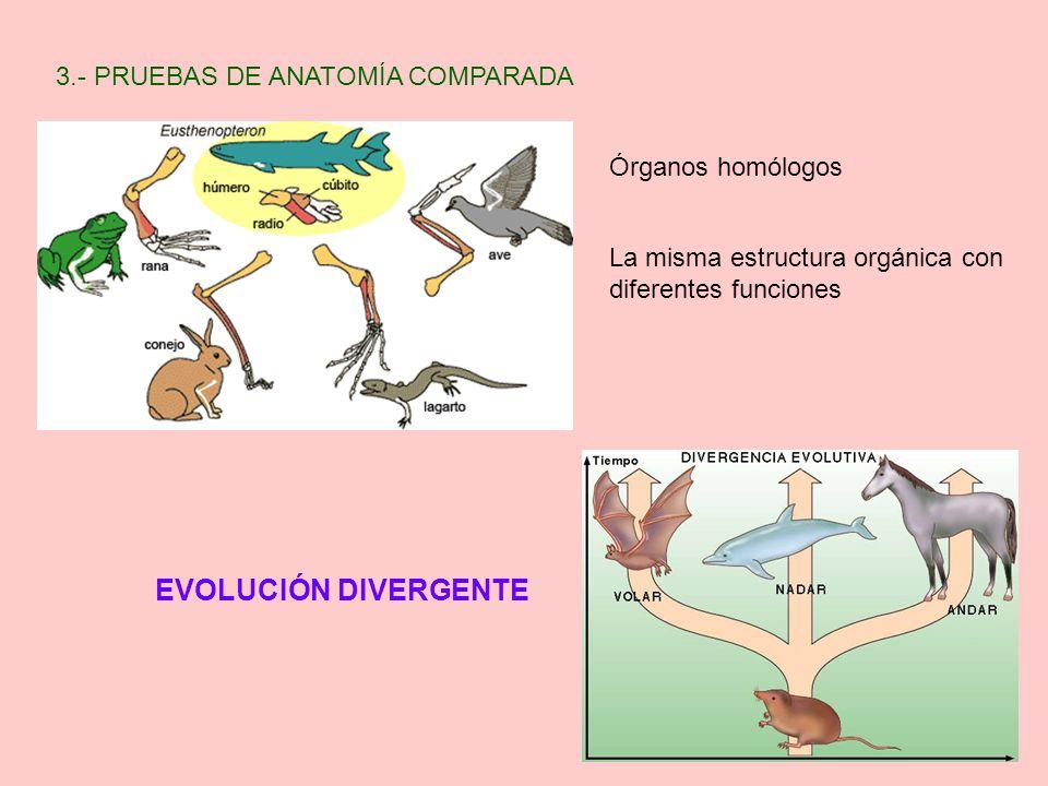 Contemporáneo Ppt Anatomía Comparada Imágenes - Anatomía de Las ...