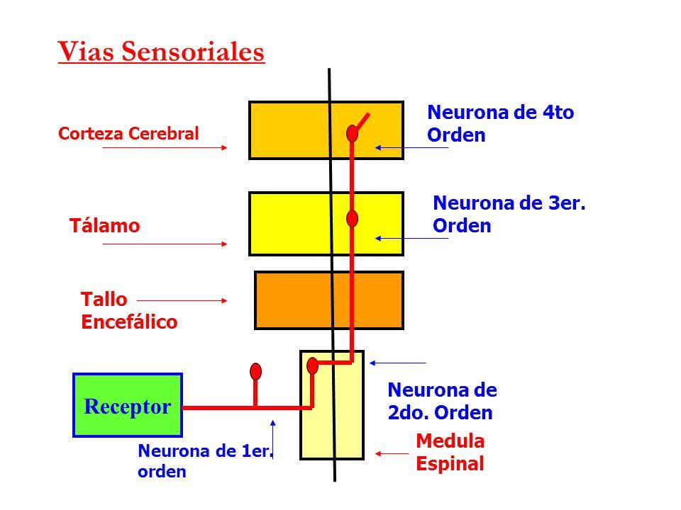 Unidad 6. Tractos ascendentes y descendentes - Anatomía de Sistema ...