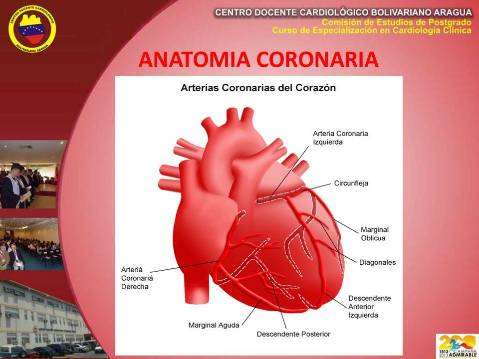 Atractivo Anatomía Y Fisiología Del Corazón Powerpoint Modelo ...