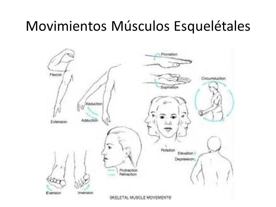 Data Subjetiva Articulaciones-Huesos – Dolor-dolor – Rigidez-deformidad – Hinchazón-trauma – Limitación de movimiento-Funcional Músculos- cualquier déficit – Dolor de cuidado – Debilidad-Conducta -trabajo, ejercicios