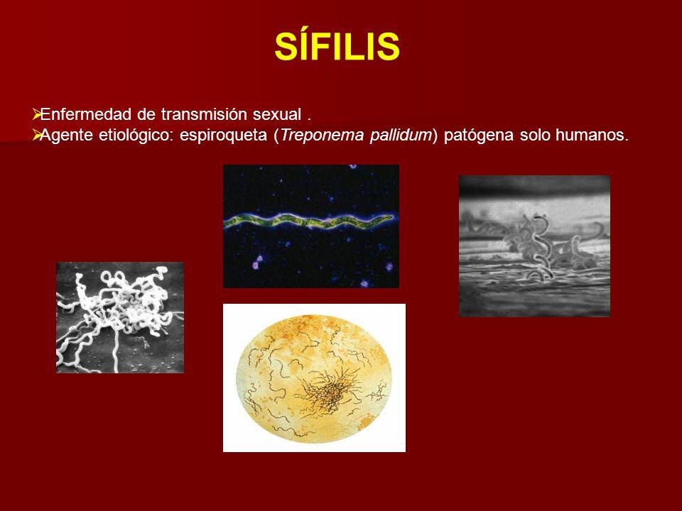 SÍFILIS  Enfermedad de transmisión sexual.  Agente etiológico: espiroqueta (Treponema pallidum) patógena solo humanos.