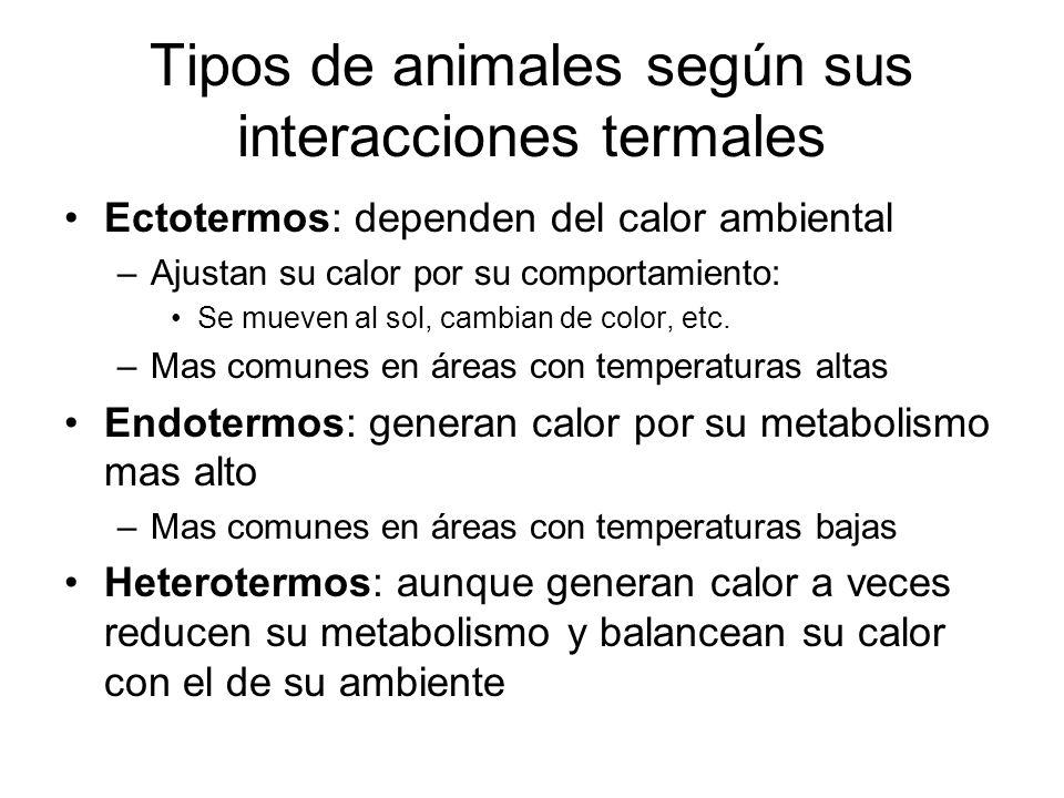 Tipos de animales según sus interacciones termales Ectotermos: dependen del calor ambiental –Ajustan su calor por su comportamiento: Se mueven al sol, cambian de color, etc.