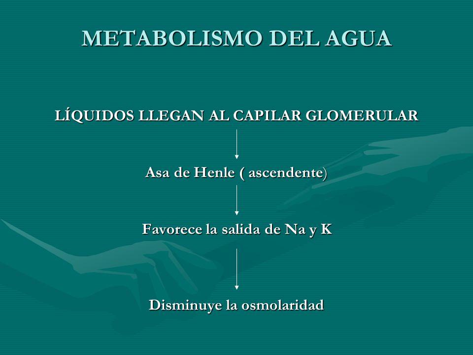 METABOLISMO DEL AGUA LÍQUIDOS LLEGAN AL CAPILAR GLOMERULAR Asa de Henle ( ascendente) Favorece la salida de Na y K Disminuye la osmolaridad