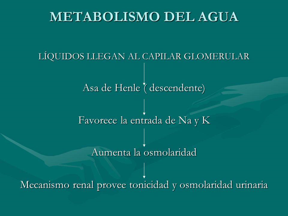 METABOLISMO DEL AGUA LÍQUIDOS LLEGAN AL CAPILAR GLOMERULAR Asa de Henle ( descendente) Favorece la entrada de Na y K Aumenta la osmolaridad Mecanismo renal provee tonicidad y osmolaridad urinaria