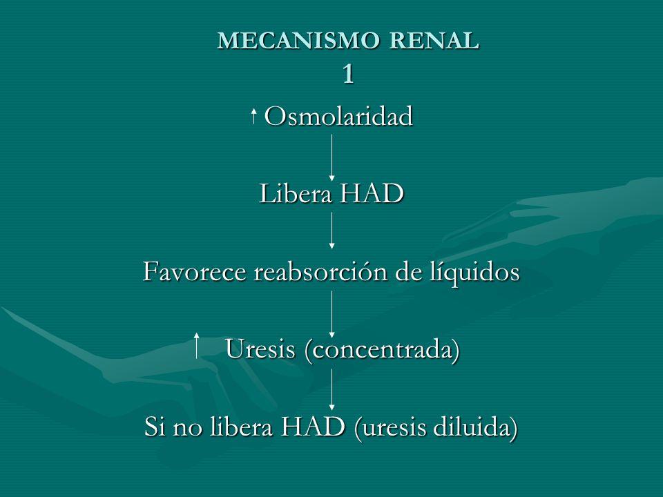 MECANISMO RENAL 1 Osmolaridad Osmolaridad Libera HAD Favorece reabsorción de líquidos Uresis (concentrada) Uresis (concentrada) Si no libera HAD (uresis diluida)