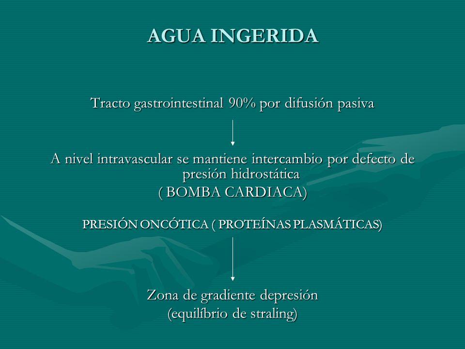 AGUA INGERIDA Tracto gastrointestinal 90% por difusión pasiva A nivel intravascular se mantiene intercambio por defecto de presión hidrostática ( BOMBA CARDIACA) PRESIÓN ONCÓTICA ( PROTEÍNAS PLASMÁTICAS) Zona de gradiente depresión (equilíbrio de straling)