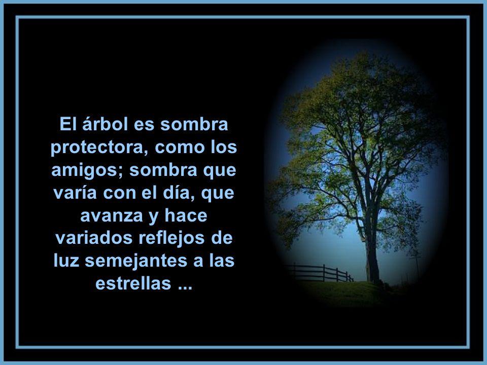 El árbol es sombra protectora, como los amigos; sombra que varía con el día, que avanza y hace variados reflejos de luz semejantes a las estrellas...