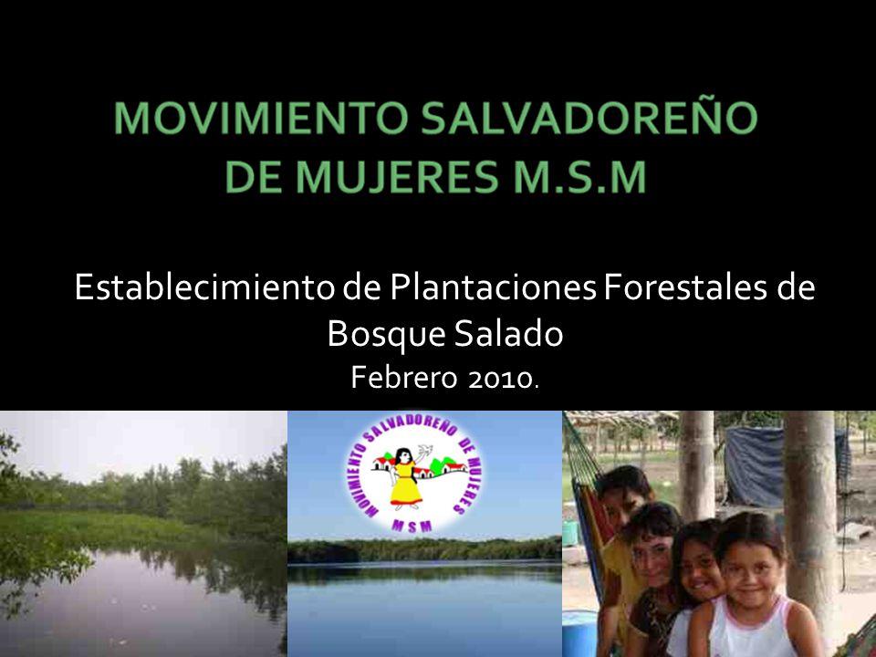 Establecimiento de Plantaciones Forestales de Bosque Salado Febrero 2010.
