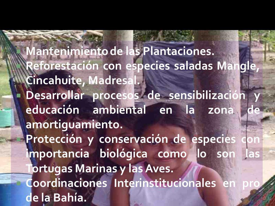  Mantenimiento de las Plantaciones.
