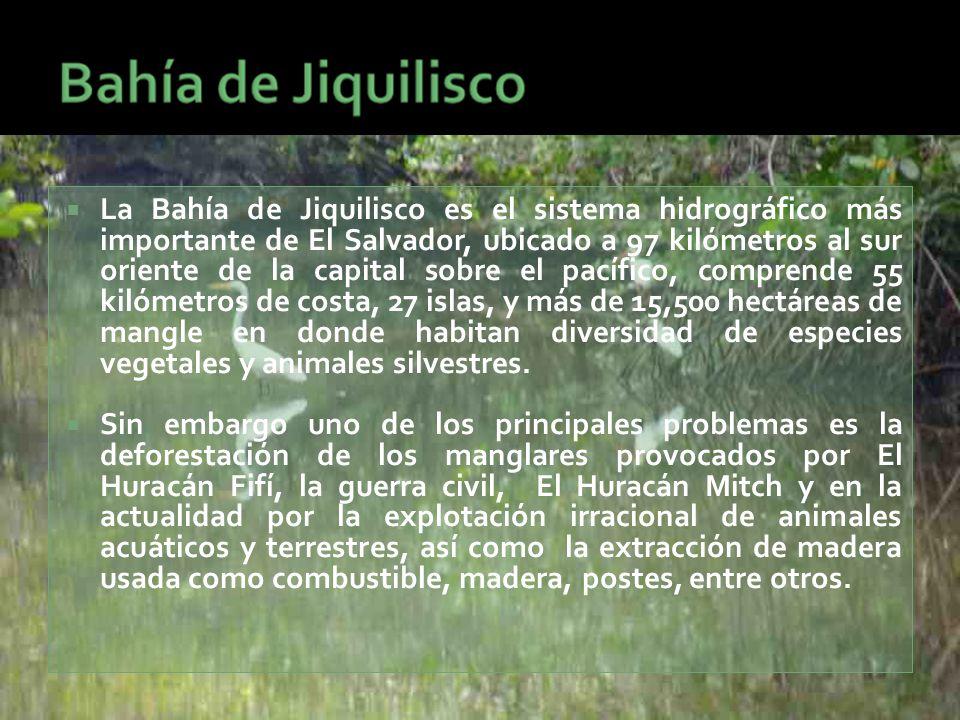  La Bahía de Jiquilisco es el sistema hidrográfico más importante de El Salvador, ubicado a 97 kilómetros al sur oriente de la capital sobre el pacífico, comprende 55 kilómetros de costa, 27 islas, y más de 15,500 hectáreas de mangle en donde habitan diversidad de especies vegetales y animales silvestres.